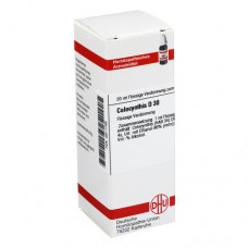 COLOCYNTHIS D 30 Dilution 20 ml