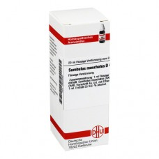 SUMBULUS MOSCHATUS D 4 Dilution 20 ml