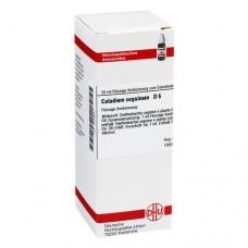CALADIUM seguinum D 6 Dilution 50 ml