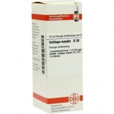 USTILAGO MAYDIS D 30 Dilution 20 ml