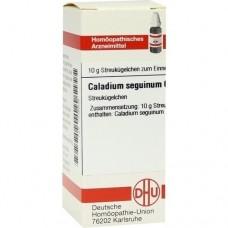 CALADIUM seguinum C 6 Globuli 10 g