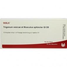 TRIGONUM VES.et Musc.sph.GL D 5 Ampullen 10X1 ml