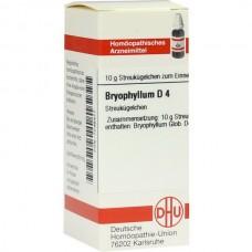 BRYOPHYLLUM D 4 10 G